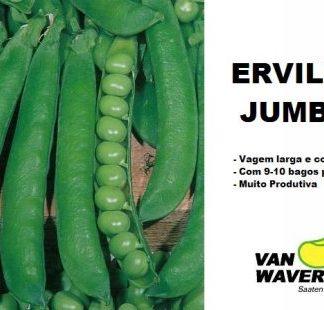 Ervilha Maravilha Kelvedon (Anã) (kg)