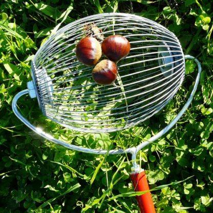 Apanhador de Frutos Secos c/ cabo