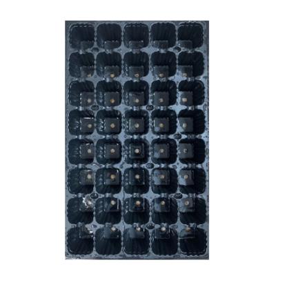 Tabuleiro plantação – 40 alvéolos