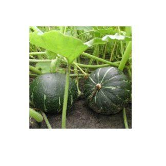 Sementes Abóbora Green Hokkaido Bio
