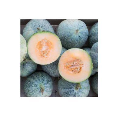Sementes Meloa Petit Gris De Rennes Bio