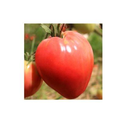 Sementes Tomate Coração de Boi Bio