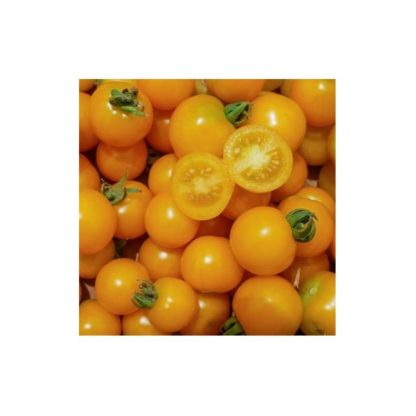 Sementes Tomate Galina Bio