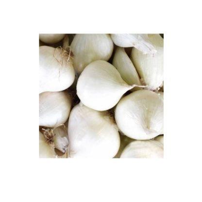 Sementes Cebola Branca de Lisboa Bio