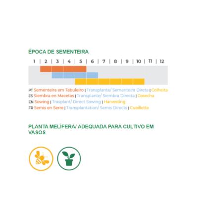 Manjericão Limão Bio